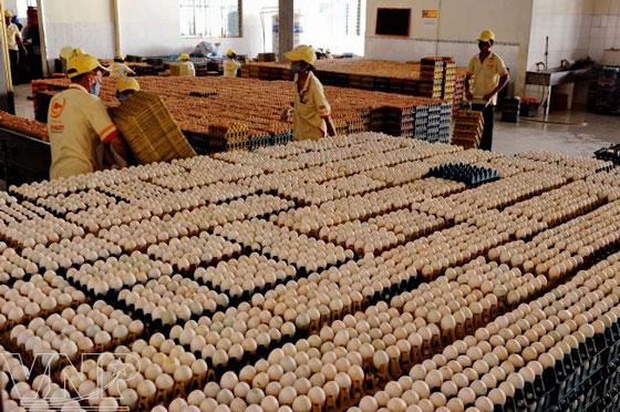 trứng gà ba huân phối hợp làm bánh xì trum