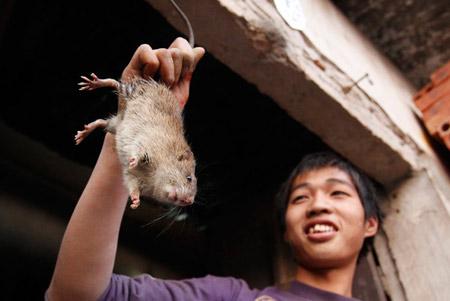 chú chuột béo mẫm