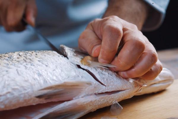 Cắt sâu tại vị trí mang cá