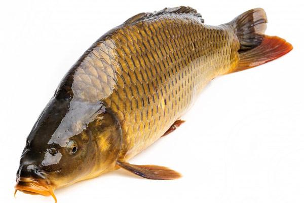 Chọn mua cá chép